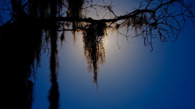 Lake Caddo moss by moonlight by badchess