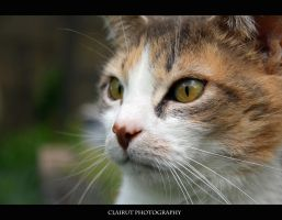 What is this ? by ClairutPhotography