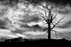 FleetBayTree2 by Coigach