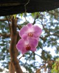 Orchid 2 by zaphotonista