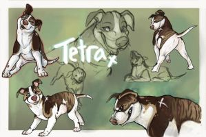 Tetra Ref by Colonels-Corner