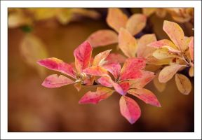 Autumn Leaves 3 by kucingitem