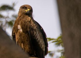 Kite without a string.. by preethi524