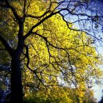 Fall Colors 11 by JER0ME-B