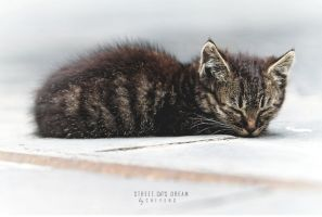 street. cat's dream. by ChiFeng-dA