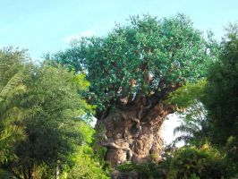 Tree of Life by LexyLou16