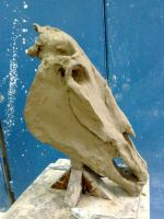 Horse skull by smallblackbook
