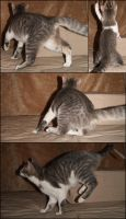 Cats in Motion P4- Stock by Rainny-Stock