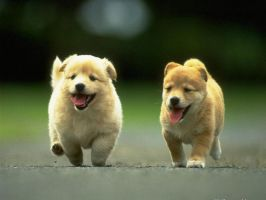 Animals_Dogs by Ashish11