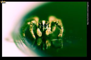 the green eyed spider by drkingks