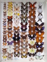 Butterfly Collection by VinVagia