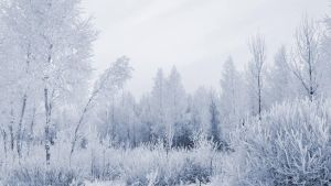 Snow and heavy frost collide by BelovedImmortal