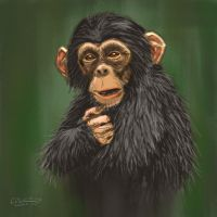Chimp by dalimas