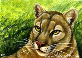 Cats of North America: Cougar by Foxfeather248