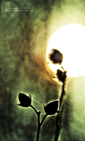 Serenata Immortale. by oro-elui