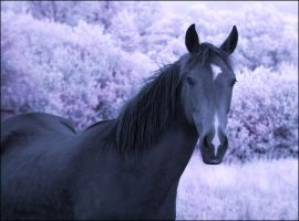 Horse Lady infrared... by MichiLauke