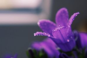 Spring. Violet by little-white-daisy
