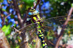 Dragonfly by 0Antares0