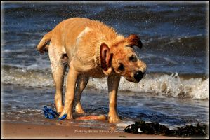 wet dog 2 by brijome