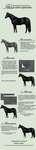 Greyscale tutorial - jet black horse by tichwin