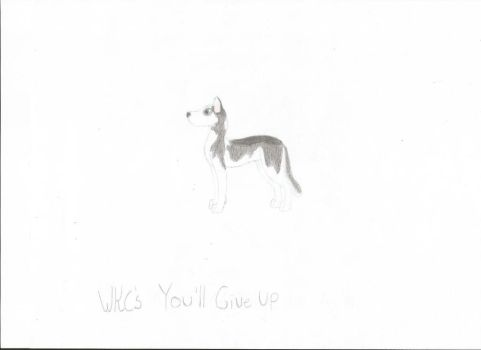 WKC's You'll Give Up - Mari's Ref by Maltes-Kennels