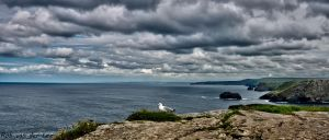 One seagull by forgottenson1