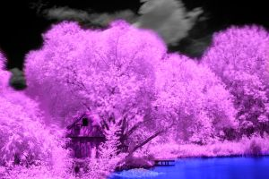 Purple Woods by TomZoy