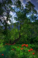 My Own Colorful Colorado by Jacob-Routzahn