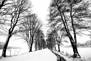 another winter scenery by augenweide
