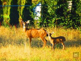 Mother And Young Deer by wolfwings1