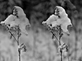 ..:winter perspective #2:.. by MonaBe4
