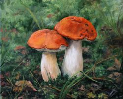 Pair of mushrooms by Art-Lep