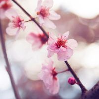 Sweetness by a2star