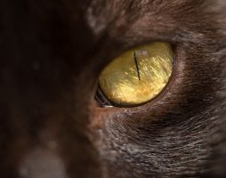 Jinx - Sigma 150mm macro + 20mm extension tube by Hatch1921
