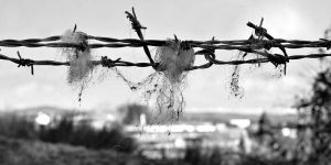 Day 60 of 365 - Barbed Wire by mole2k