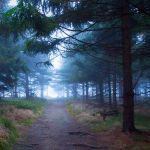 Path to the light by DominikaAniola