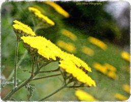 Yellow Vibrations by GlassHouse-1