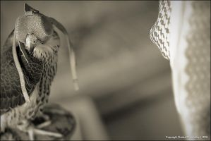 Falcon by KhaledPhotography