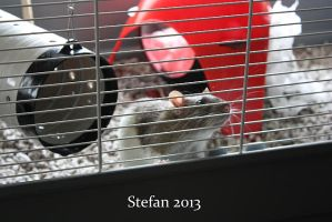 Stephen by Isilian2005
