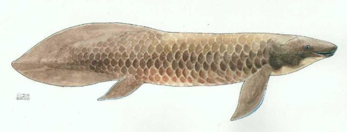 Australian Lungfish, by Outlier