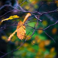 Fragile Autumn by adamlack