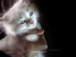 Cat 24 by eyadness