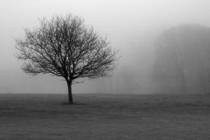 Lonely tree by Swamp-talker