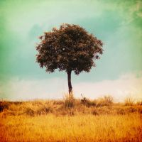 Lonely Tree.. by Mangmoty