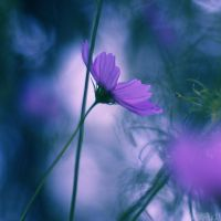 cold cosmos. by simoendli