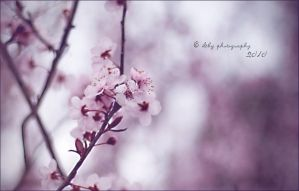 Pastel Pink by ILTBY