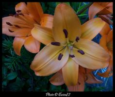 Flower 29 by Twins72