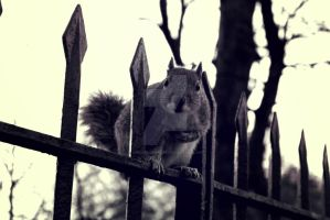 Squirrel at Hyde Park by TheLovingKind89