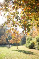 Picnic in the fall by kwant