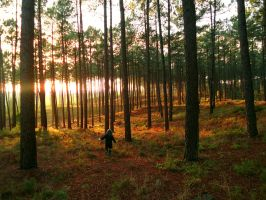 Fall sunsets by Selenia-actimel